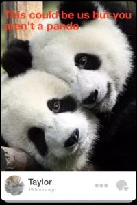 This guy really liked pandas.
